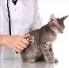 Ветеринарные клиники в Омутинском
